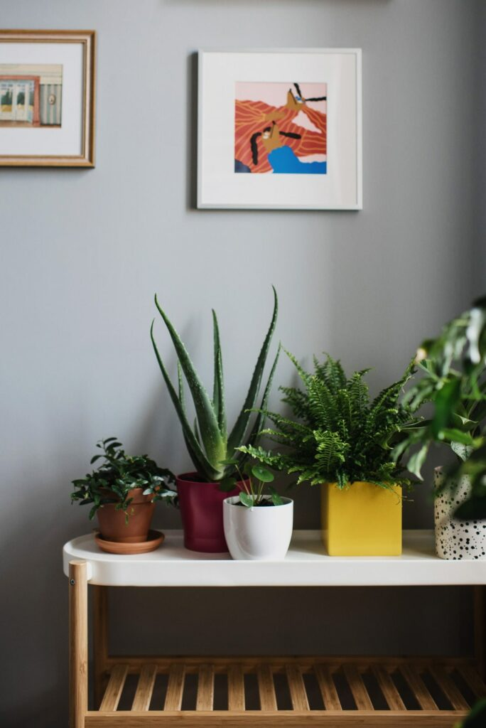 House plants in side table